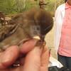 Bird_banding-9-13-2012_IMG_1528