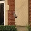 Bird_banding-9-13-2012_IMG_1521