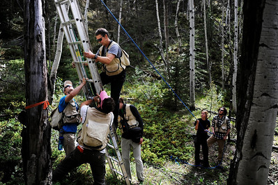 The Flammulated Owl Research Project is in able hands as students steady the ladder for Biology Professor Brian LInkhart. Linkhart is attempting to access an owl nest so that the young owlets, and the attending breeding female, can be banded and measured as part of a study to determine how forest characteristics affect own demography. Photo by Colorado Springs Gazette photographer, Michael Ciaglo. (From left: Ross Calhoun '14, Collin Knauss, Brian Linkhart, Bryan Grundy '13, Alice Winter, and Max Ciaglo '14)