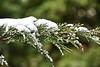Snow_9771b