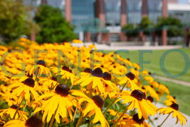 Summer fall 2018 college campus green garden gardens flowers KW