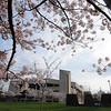Center for the Arts with cherry blossom trees in bloom. Photo by Evan Cantwell/Creative Services/George Mason University 090403002