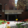 The Harris Theatre with tulips blooming on a spring day. Photo by Evan Cantwell/Creative Services/George Mason University. 090425278
