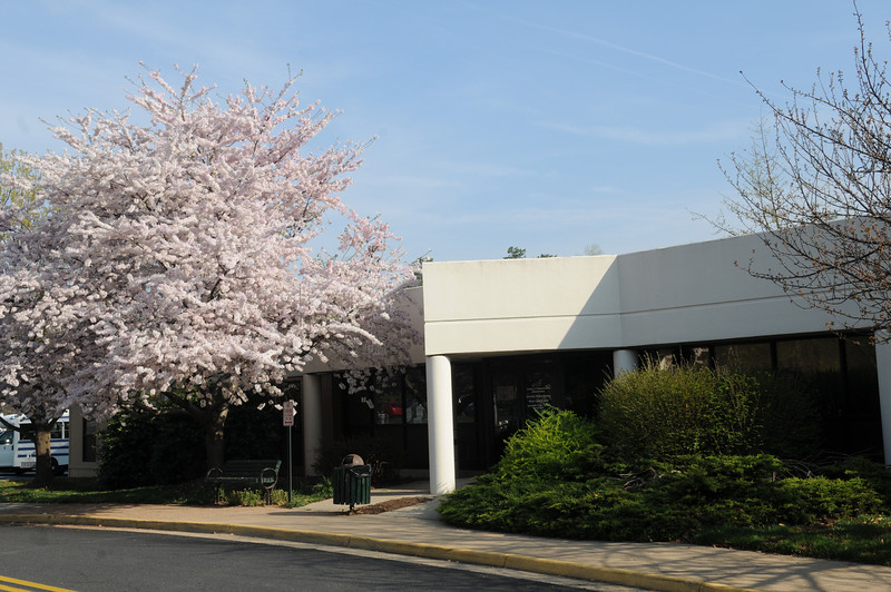 Nottoway Annex with spring flowers in bloom.  Photo by Creative Services/George Mason University