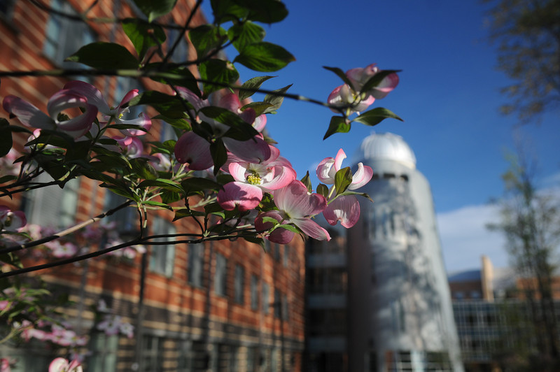 Research Hall in the background on the Fairfax Campus. Photo by Evan Cantwell/Creative Services/George Mason University