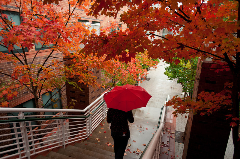 Fairfax Campus, fall foliage, leaves changing, rain, umbrella