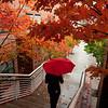 Fairfax Campus, fall foliage, leaves changing, rain, umbrella