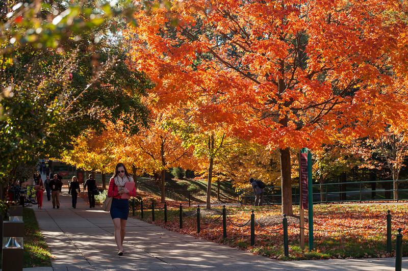 Autumn at Fairfax campus