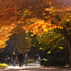 Students walking to class in the Fall.