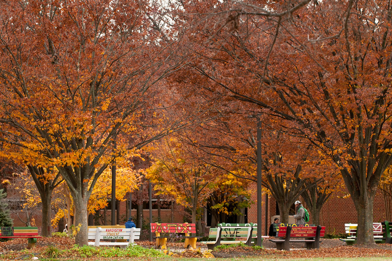 Student Benches in Fall