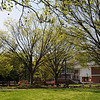 Student club and organization benches in the Spring. Photo by Evan Cantwell/Creative Services/George Mason University
