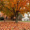 Autumn leaves in the Shenandoah neighborhood on campus. Photo by Evan Cantwell/George Mason University