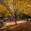 Autumn leaves color the campus. Photo by Evan Cantwell/George Mason University