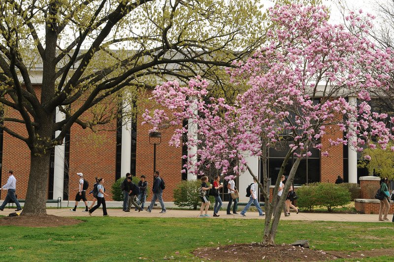 Students walking in front of Fenwick Library in the Spring. Photo by Evan Cantwell/Creative Services/George Mason University