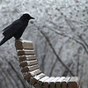 A bird perches on a bench at the Fairfax Campus. Photo by Evan Cantwell/Creative Services/George Mason University