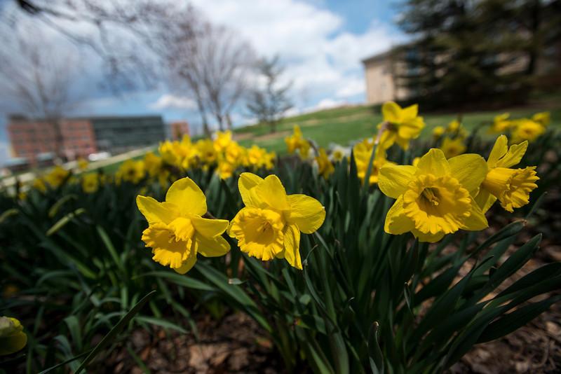 Spring at the Fairfax Campus