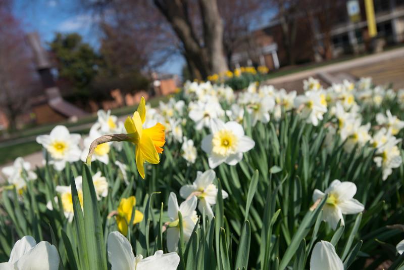 Fairfax campus in the Spring
