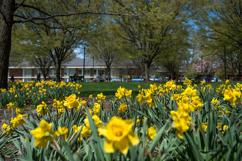 Spring at the Fairfax Campus