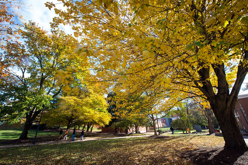 Fairfax Campus in Fall