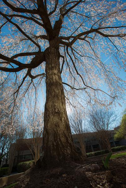 Fairfax Campus outdoors