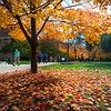 Fall Campus