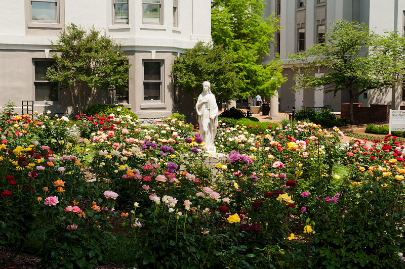 The rose garden near mansion at Belmont