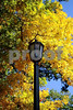 DSC_0303 Lampost w fall trees v2