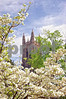 00120214 Duke Chapel w Dogwood tclc BU sat 1 prodeX 20x30