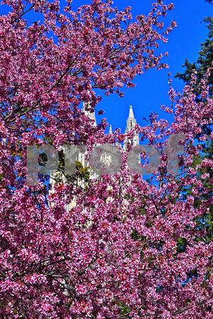Duke Spring 2012
