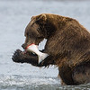 Alaska07-1443