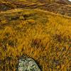 Lichen covers a rock near Polychrome Pass in Denali NP, Alaska.