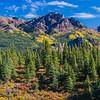 USA. Alaska. The onset of fall turns the Alaska Range adjacent to Denali NP into a kaleidoscope of colors.