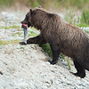 Alaska08-0088