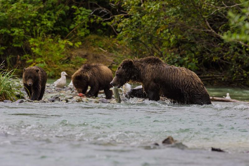 Alaska06-0434