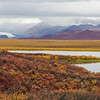 View of pond and fall colors near the Alaska Range