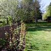 The Raspberry Bush - May 27