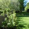 The Raspberry Bush - June 4