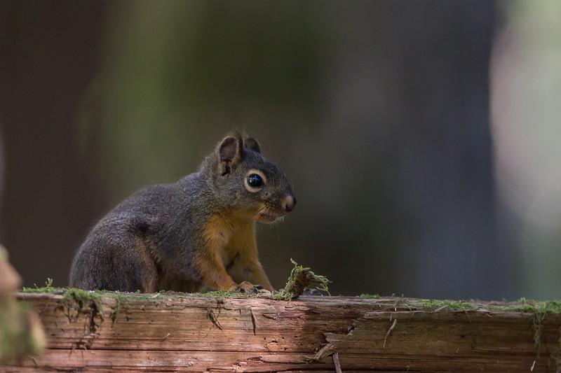 Egern