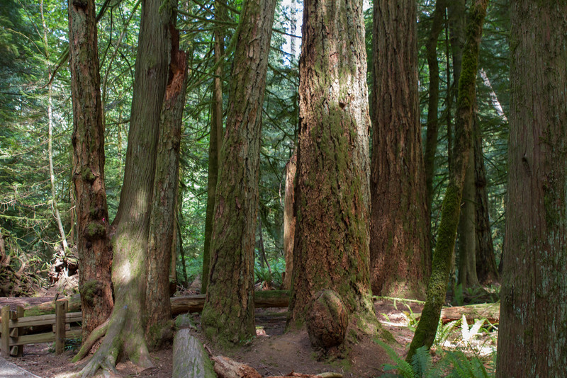 Vancouver Island 2015