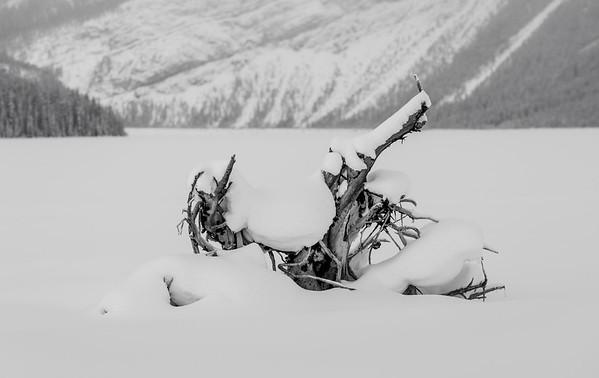 Lake Bones