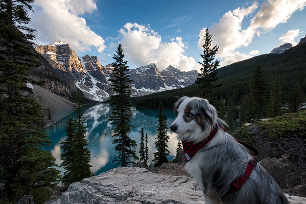 A Dog with a View