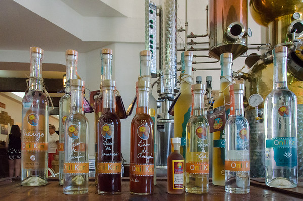 Onilikan's whole line of artesanal liquors | Tequila tasting in Mazatlan, Mexico