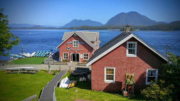 Remote Passages: Black bear tour and whale watching tours in Tofino, BC