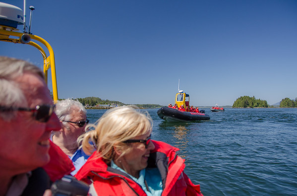Remote Passages Tofino tours | Black bear tour Tofino, BC