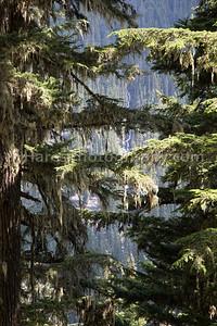Glacier NP - Canada-5248
