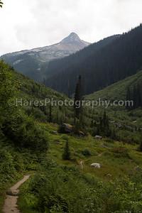 Glacier Canada NP-5151