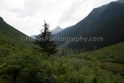 Glacier Canada NP-5116