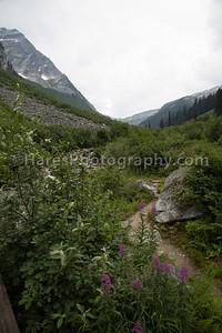Glacier Canada NP-5171