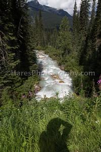 Glacier Canada NP-5227