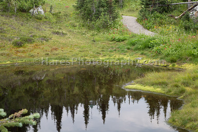Mt Revelstoke NP-4874